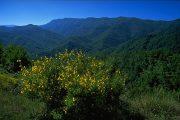 Bologna: la Foresta di Sasso Fratino diventa Patrimonio dell'Umanità dell'Unesco