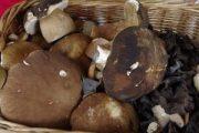 Terre del Reno (fe): le autorizzazioni per la raccolta funghi nel territorio comunale