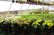 San Carlo (fe): un meraviglioso giardino fiorito tutto da vivere alla Pola Vivai