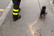 Bologna: cagnolino al sole e senza acqua salvato da municipale e vigili del fuoco