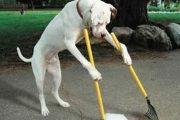 Vigarano Mainarda (fe): Marcello Fortini interroga la Paron sui cestini delle deiezioni canine