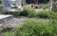 Ferrara: indecorosa manutenzione ordinaria del verde cimiteriale