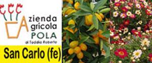POLA az Agricola