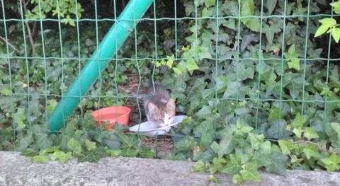 Maranello (Mo): Strage di gatti - falciati vivi