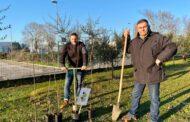 Bondeno (fe): Al via la seconda fase di distribuzione piante gratuita