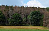 Riparte in Emilia Romagna la campagna per piantare nuovi alberi