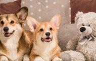 Comacchio: Lascia il cane chiuso in auto, denunciato dai Carabinieri